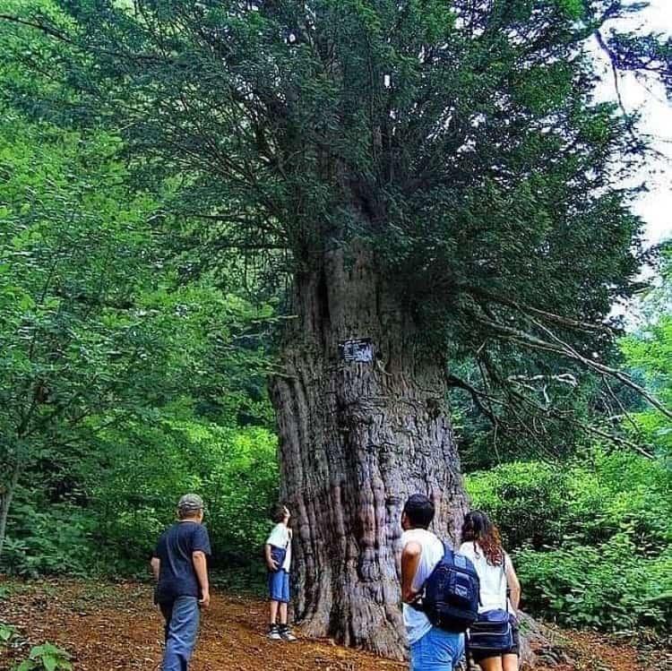 KOS: Kanadalı şirket Zonguldak'ta altın sondajına başladı, 10 bin ağaç kesildi
