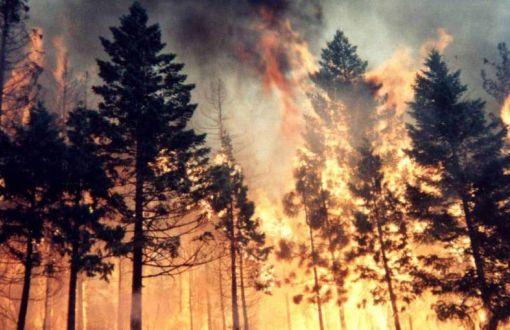"""Ekoloji Birliği: """"Çıkan-çıkarılan yangınların deniz manzaralı olması tesadüf mü?"""""""