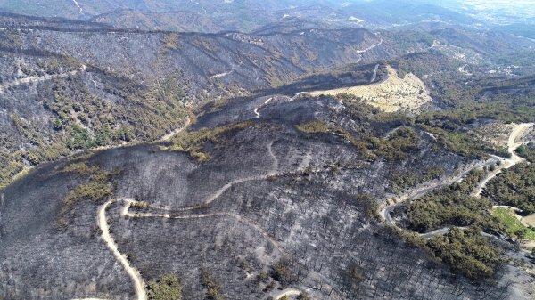 Ege yangınlarında uçak kullanılsaydı felaketin boyutu bu olmayacaktı