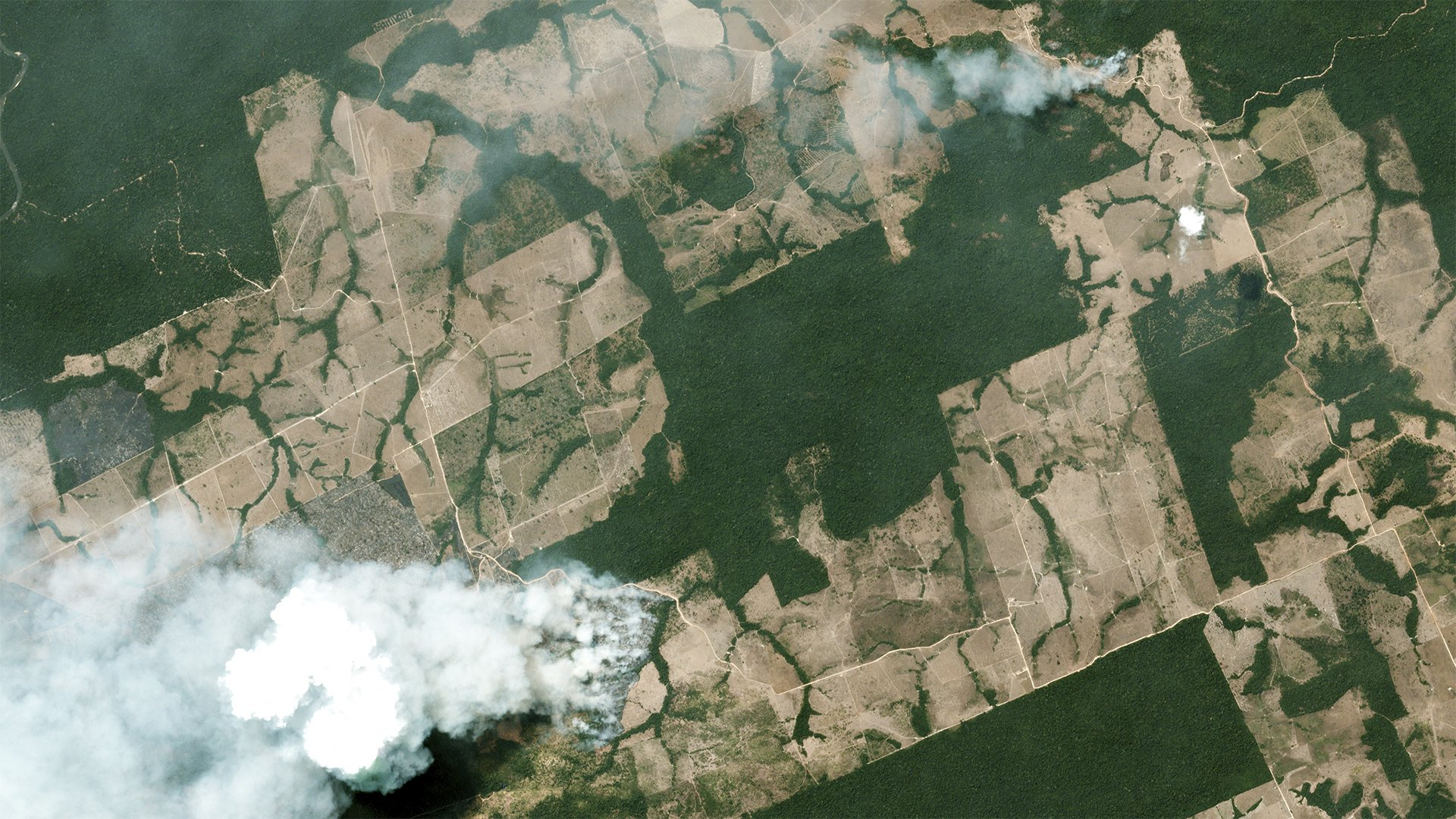 Tarım endüstrisi Amazonları yakıyor!