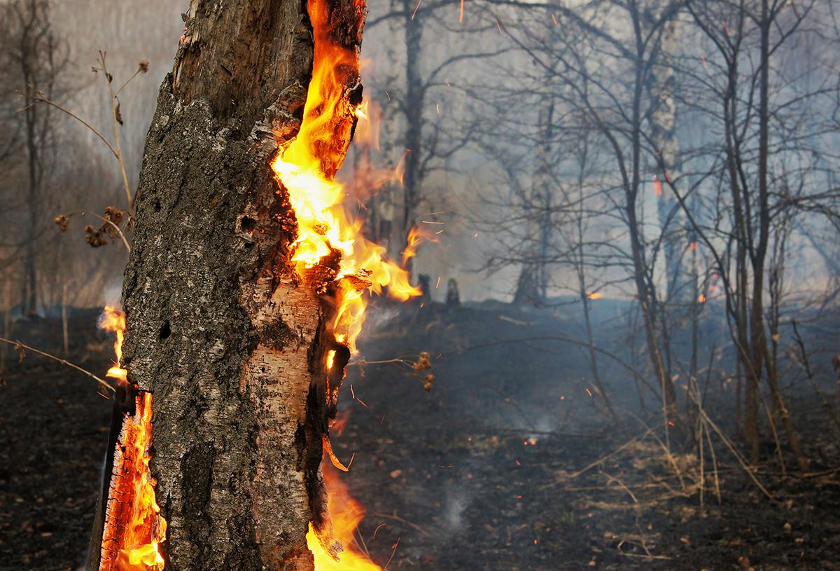 Ağustos ayında 300 orman yangını çıktı