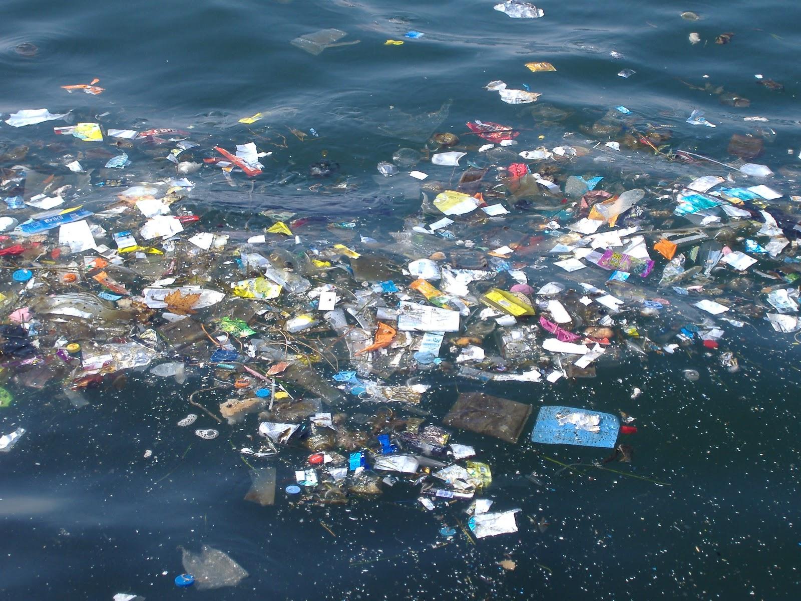 Denizlerimiz çok hasta, Marmara ölü deniz olma yolunda: Tek sorumlu insan