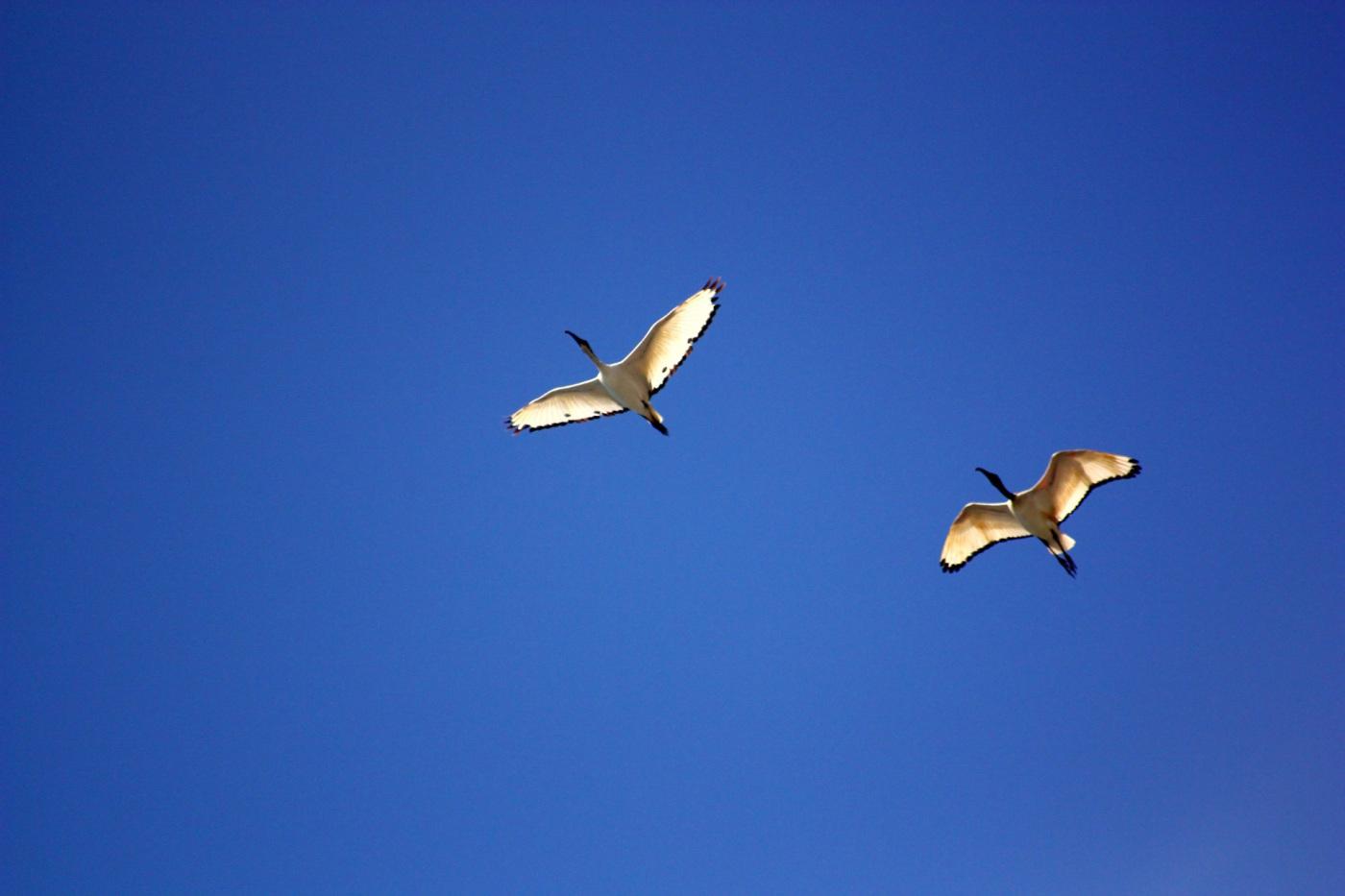 2.9 Milyar Kuş Artık Yok