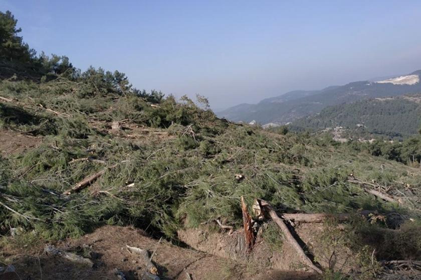 Kazdağları'nı savunanlar yeni bir ağaç katliamını belgeledi