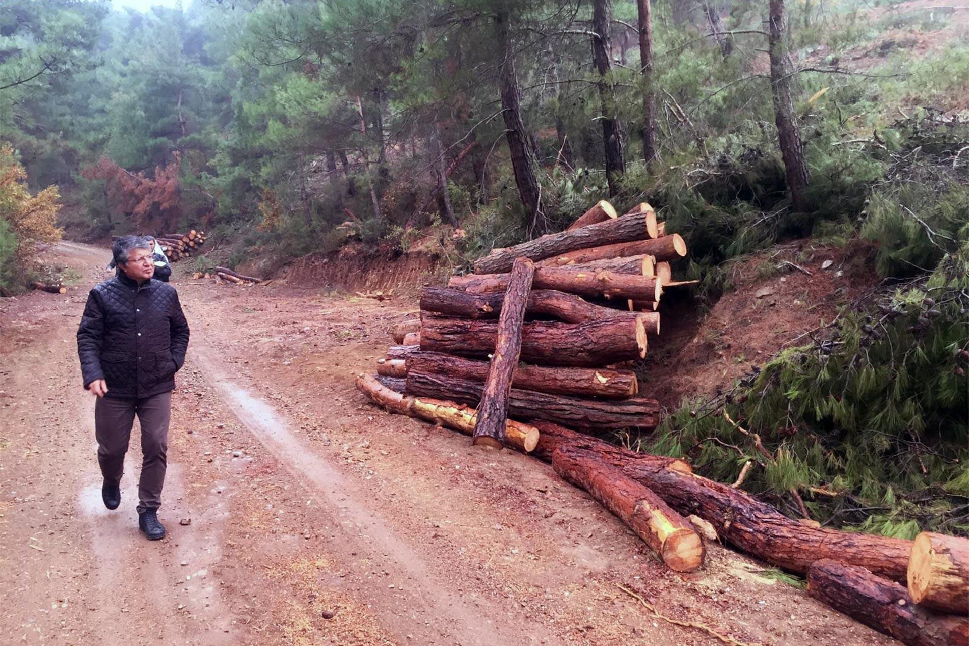 Çanakkale orman katliamının eşiğinde: Sondaj çalışması ve ağaç kesimi sürüyor