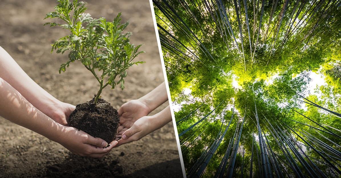 Bir Trilyon Ağaç Dikmek İklim Değişikliğini Durdurmayacak