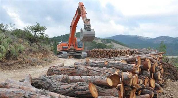Ağaçlandırma' seferberliği ormanlardaki yıkımı önler mi?
