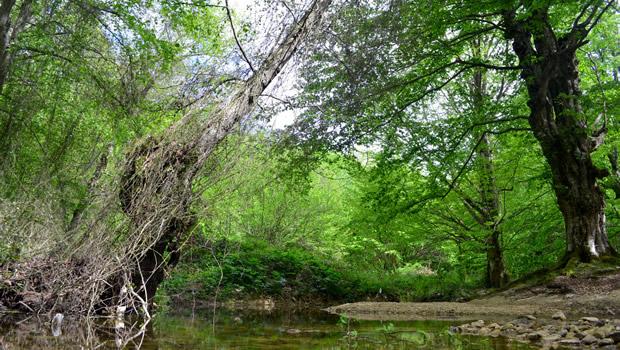 Tekirdağ'ın Güngörmez Ormanları'na yeniden göz diktiler