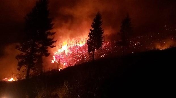 Karadeniz'deki yangın 69 noktaya ulaştı: Altı ev yandı, tarım arazileri zarar gördü