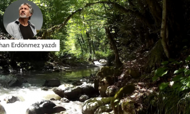 Orman diye diye (11): Ormanın örgütleri – türkiye ormancılar derneği