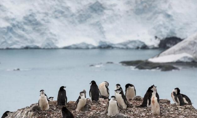 İklim krizi: Son 140 yılın en sıcak Ocak ayı yaşandı