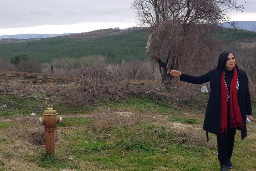 Malkara'da Bazalt Ocağı için ÇED Süreci Başlatıldı: KUZEY ORMANLARI'NDAKİ Bu Talana İzin Vermeyeceğiz