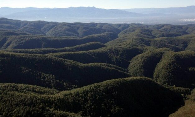 Kuzey Ormanları'nın Sapanca mevkinde mesire tehdidi