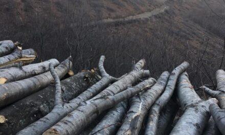 Kocaeli'de Kuzey Ormanları'nın Yüzlerce Ağacı Neden Kesiliyor?
