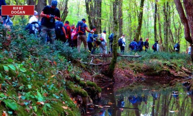 9 bin ağaç tehlikede, bilirkişiler uyardı: Proje orman bütünlüğüne zarar verecek