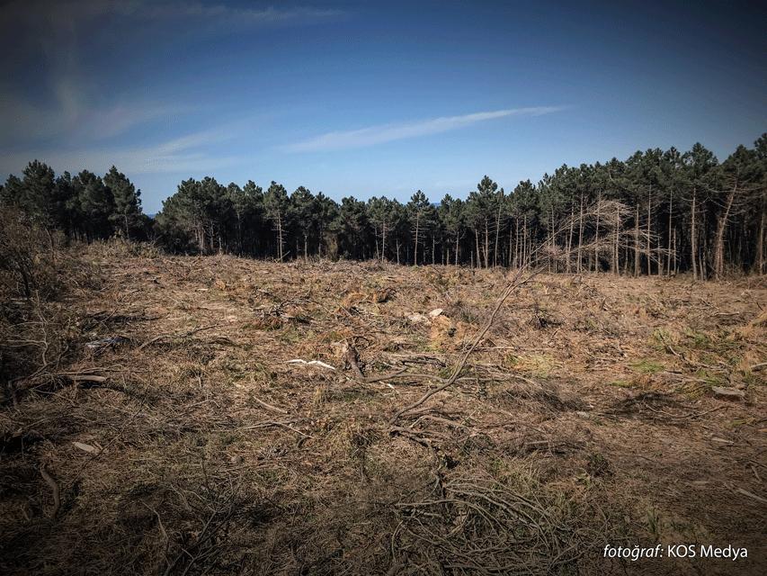 Habitatların yıkımı ve biyoçeşitliliğin kaybı COVID-19 gibi hastalıkların ortaya çıkması için mükemmel koşulları yaratıyor