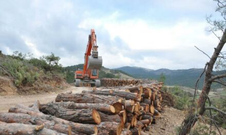 Prof. Dr. Erdoğan Atmış: Ormanlar ekonomik büyüme için gözden çıkarılıyor