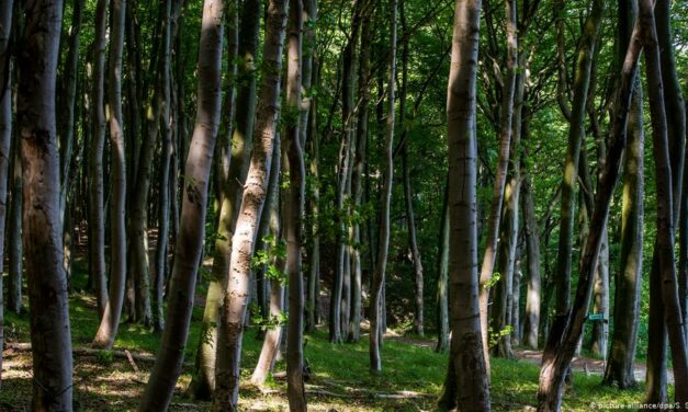 İklim krizine karşı en etkili güç: Ormanlar