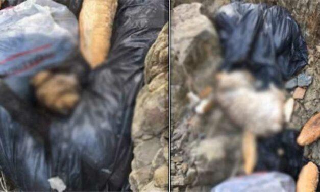 Kuzey Ormanlarında Vahşet: 5 torba dolusu katledilmiş hayvan bulundu