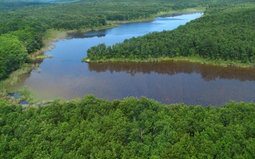 Tarım ve Orman Bakanlığı İğneada Longoz Ormanları için ihale açtı