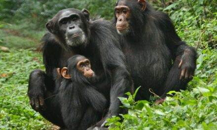 Virüslerin yayılma sebebi yaban hayat teması ve ormansızlaşma