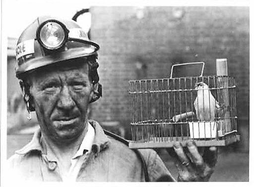 Kanarya Kuşları, Maden İşçileri ve 1 Mayıs