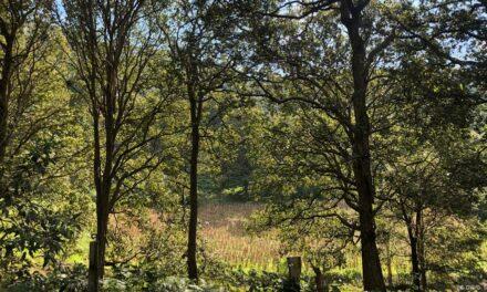 Araştırma: Her 6 saniyede bir futbol sahası kadar orman yok oldu