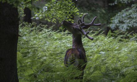 Kuzey Ormanları yaban hayatı canlandı