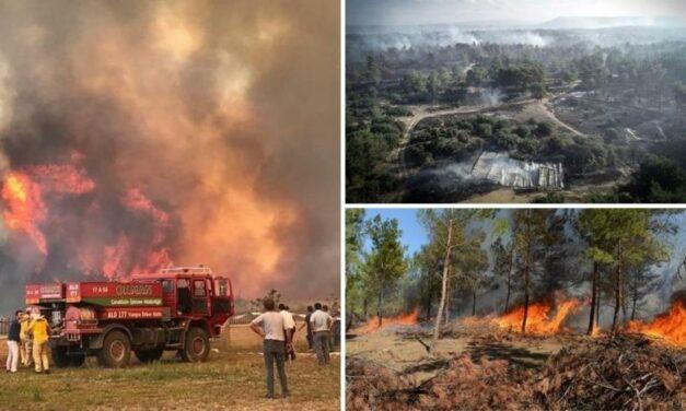 Orman yangınları hakkında son durum: 'Acil bir planlamaya ihtiyaç var'