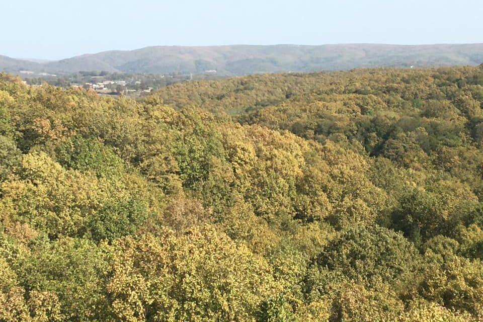 Kuzey Ormanları – Istrancalar'da Sessiz Yangın