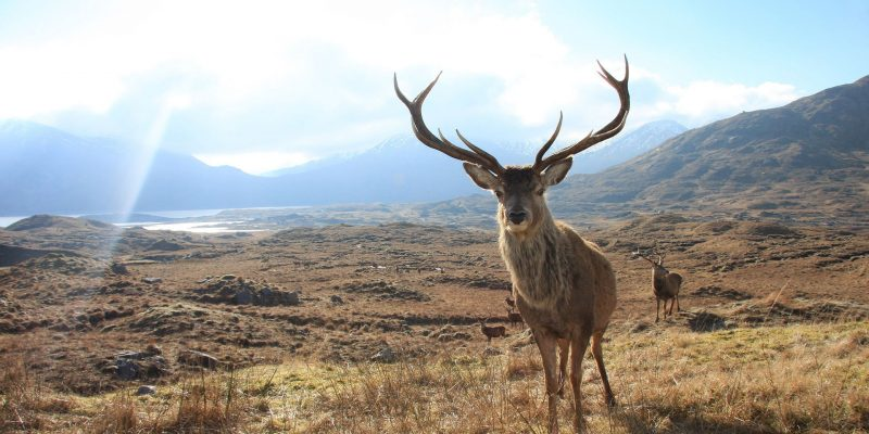 Hayvanları Koruma Günü'nde 230 STK'dan çağrı: Avcılık yasaklansın