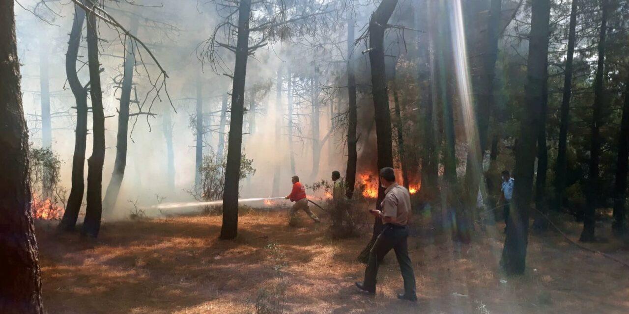 Kuzey Ormanları Araştırma Derneği İzleme Raporu