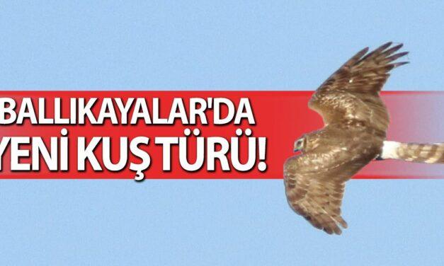 Ballıkayalar'da yeni kuş türü!